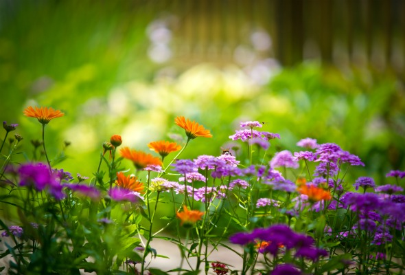 What is Garden Flowers for Everyone?