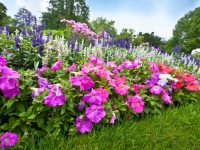 Starting a Flower Garden? Here Are Tips for Beginners